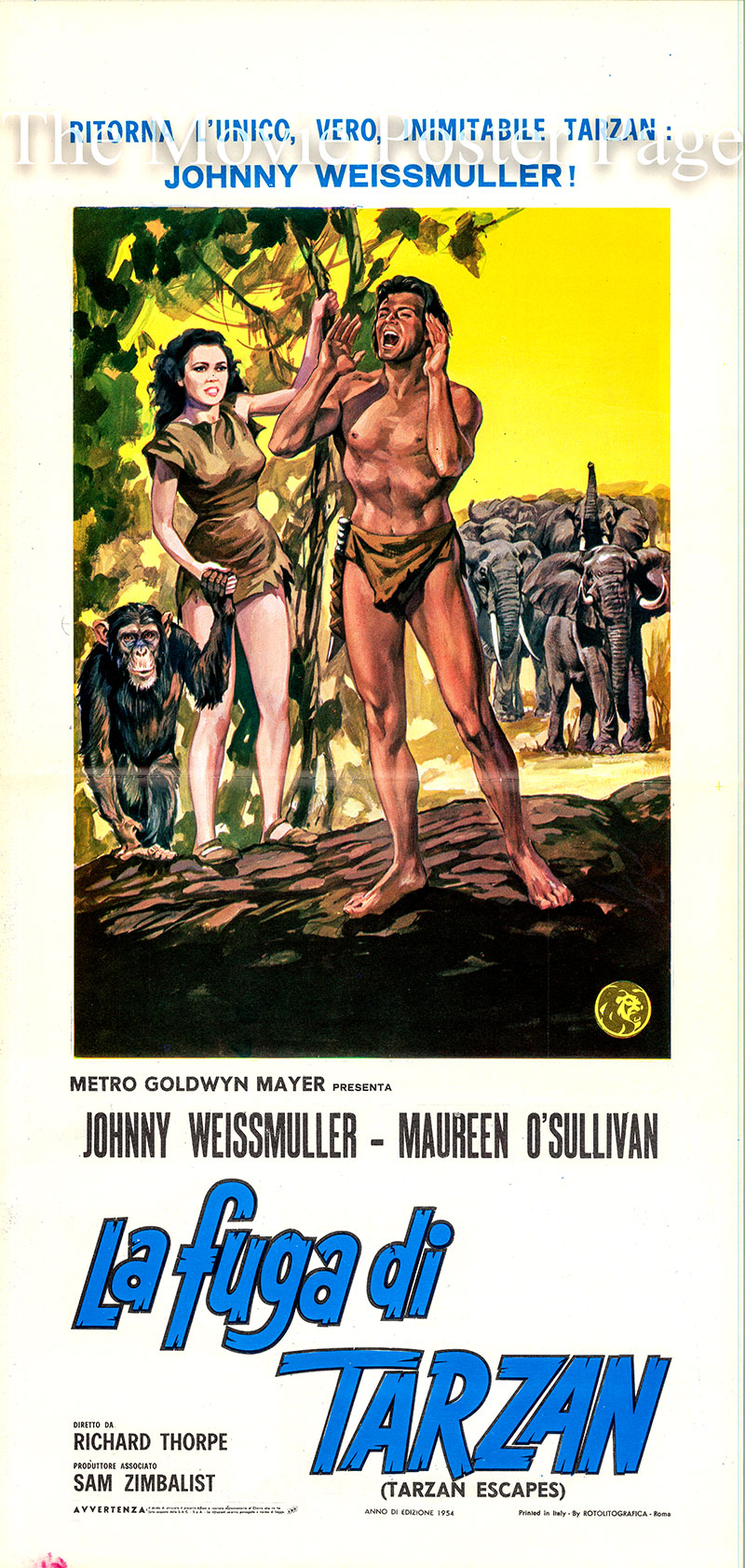 Pictured is an Italian locandina poster for a 1954 rererelease of the 1936 Richard Thorpe film Tarzan Escapes starring Johnny Weissmuller as Tarzan.