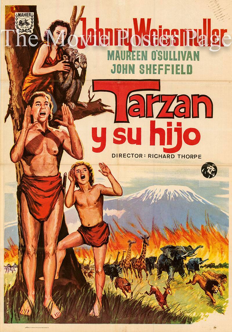 Pictured is a Spanish one-sheet poster for a 1972 rerelease of the 1939 Richard Thorpe film Tarzan Finds a Son starring Johnny Weissmuller as Tarsan.