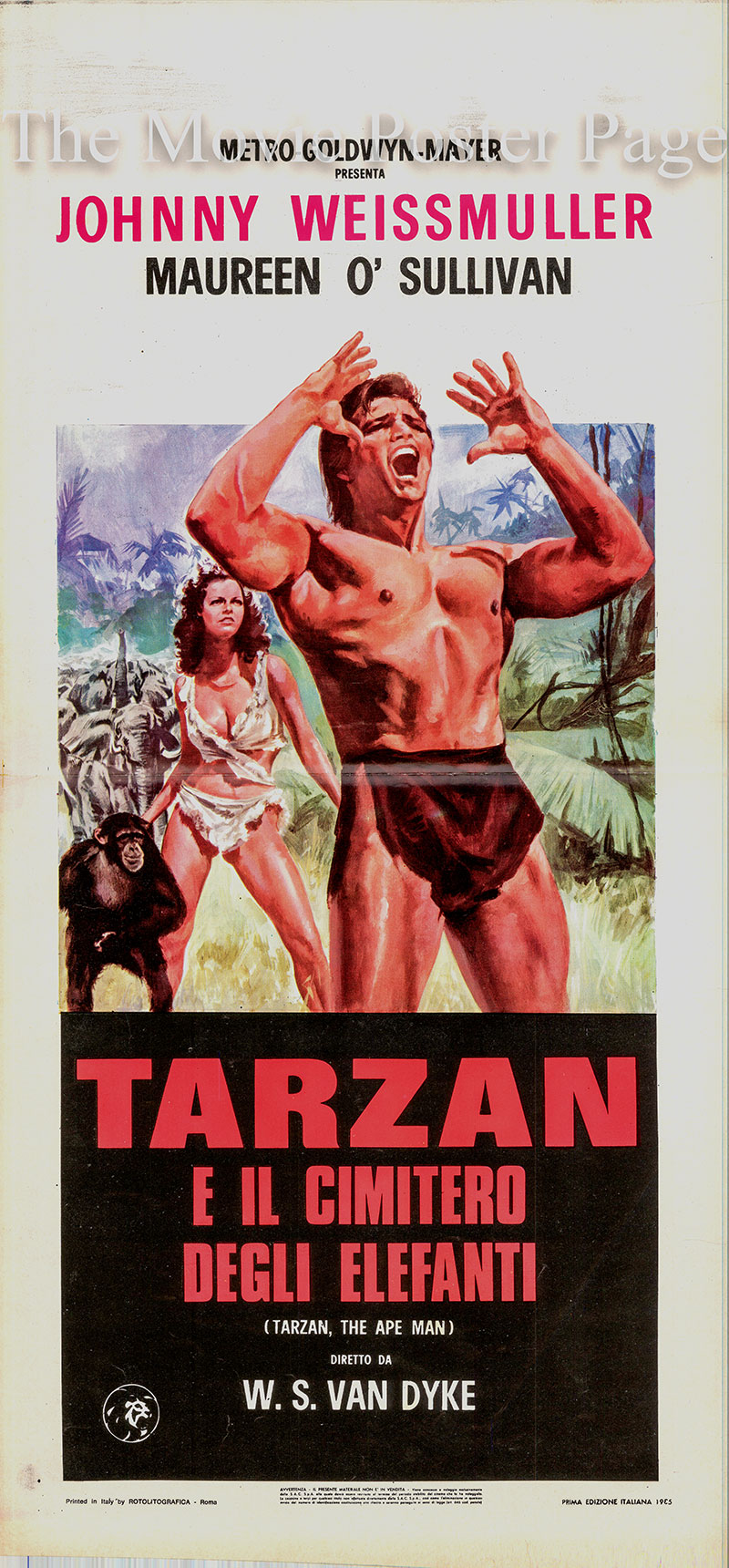 Pictured is an Italian locandina poster for a 1960s rerelease of the 1932 W.S. Van Dyke film <i>Tarzan the Ape Man</i> based on a screenplay by Cyril Hume and starring Johnny Weissmuller as Tarzan.