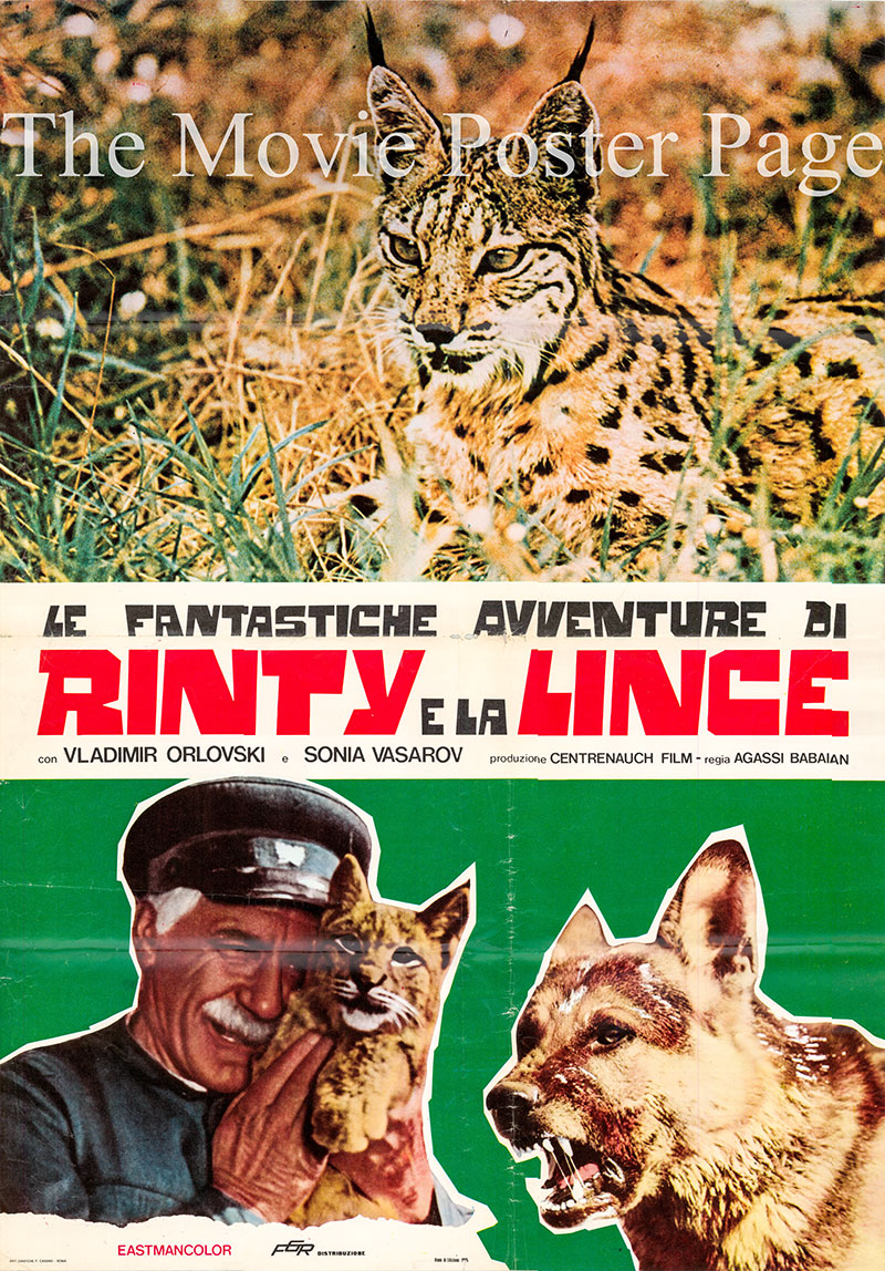 Pictured is an Italian one-sheet poster for the 1972 Agassi Babayan film Rinty e la Lince starring Vladimir OrLovski.